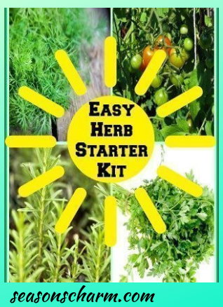 Easy Vegetable Herb Garden Kit Housewarming Gift